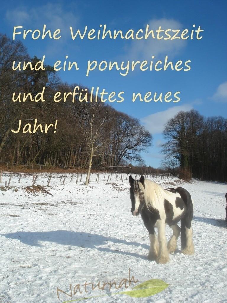 Ponyreiches Jahr und Weihnachten