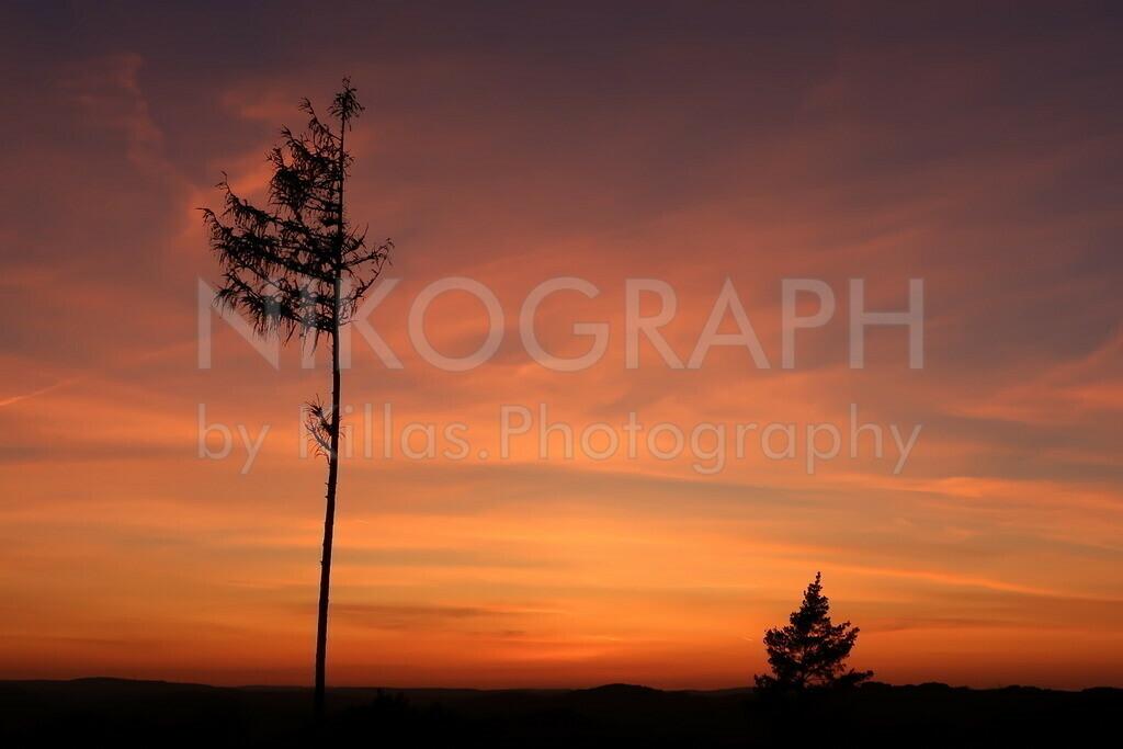 Baumsilhouette im Sonnenuntergang  | Die Silhouette von Bäumen des Iserlohner Stadtwaldes während des Sonnenunterganges.