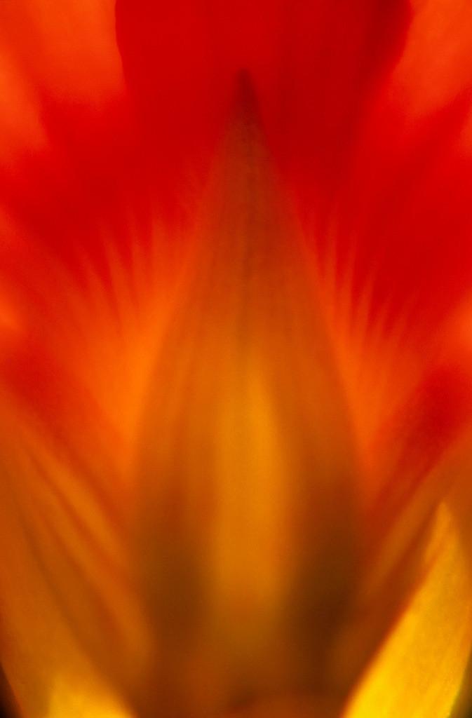 Feuer 08   Kapuzinerkresse