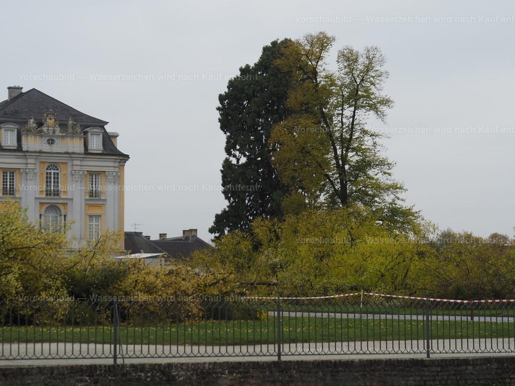 Last tree falling (1/10)