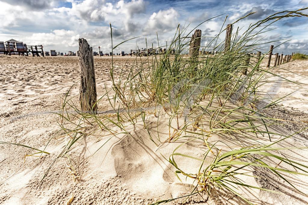 Dünengras am Strand | Am Strandparkplatz