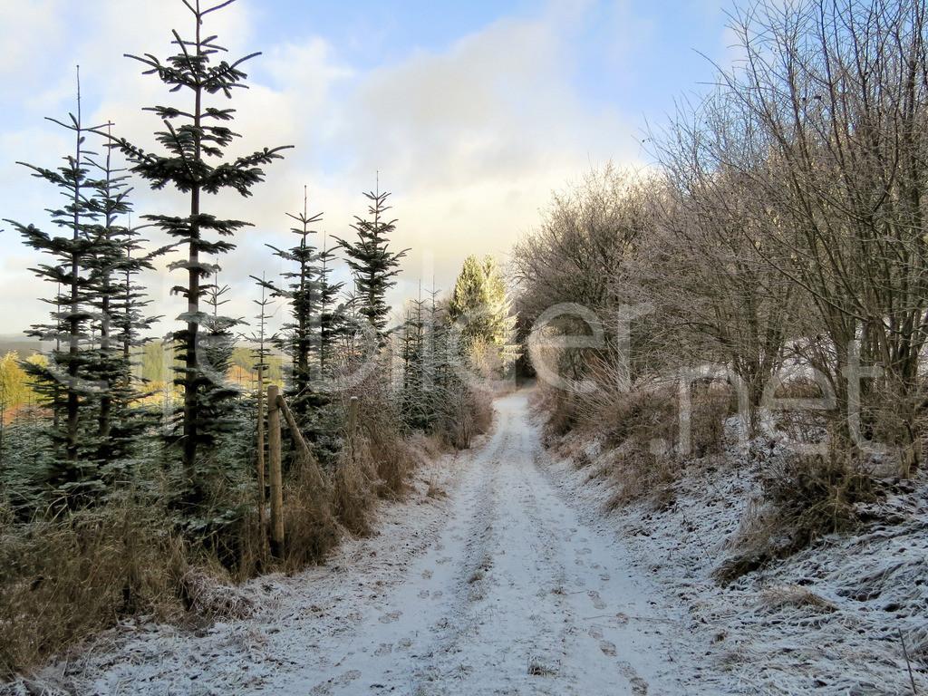 winterlicher Wald bei Üdersdorf in der Eifel   Daun Üdersdorf in der Vulkaneifel