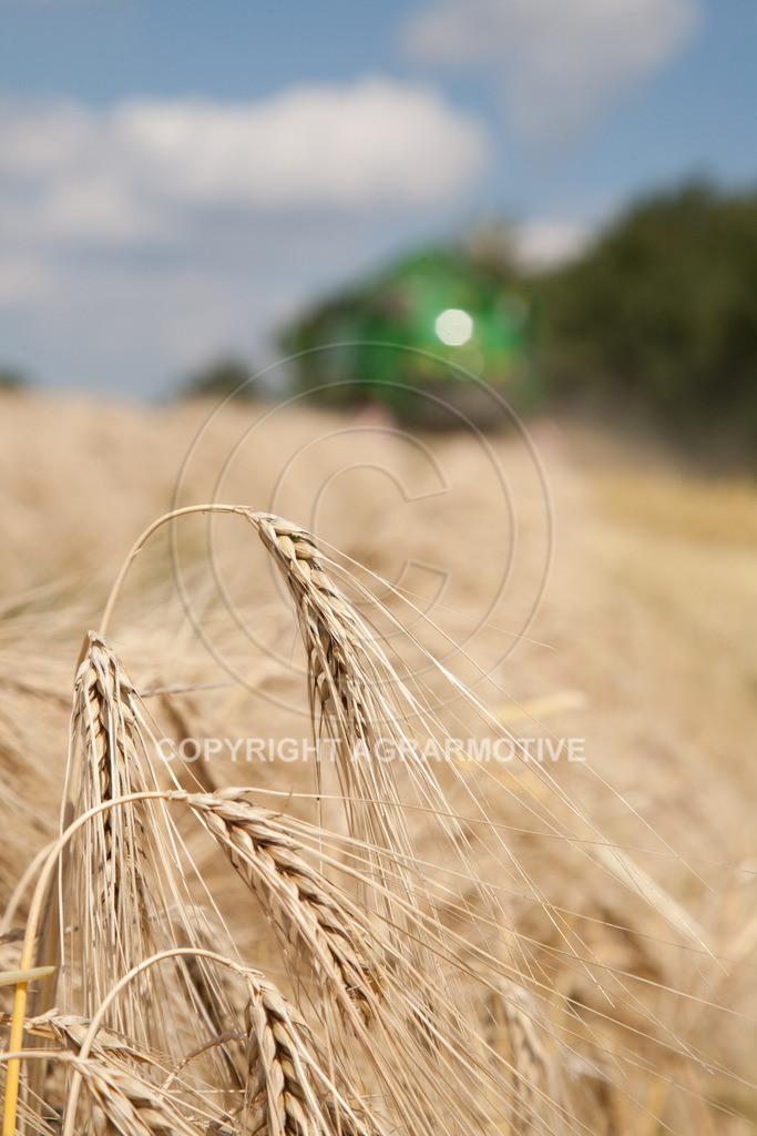 20110710-IMG_3818 | Wintergerste wird geerntet - AGRARFOTO