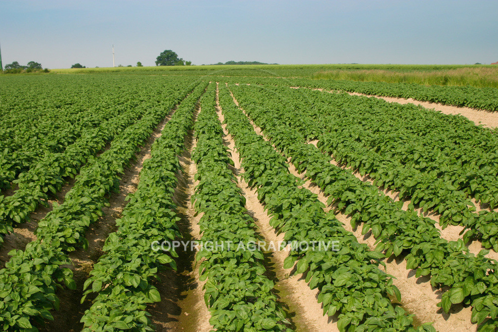 142_4298 | Kartoffelacker - AGRARBILDER