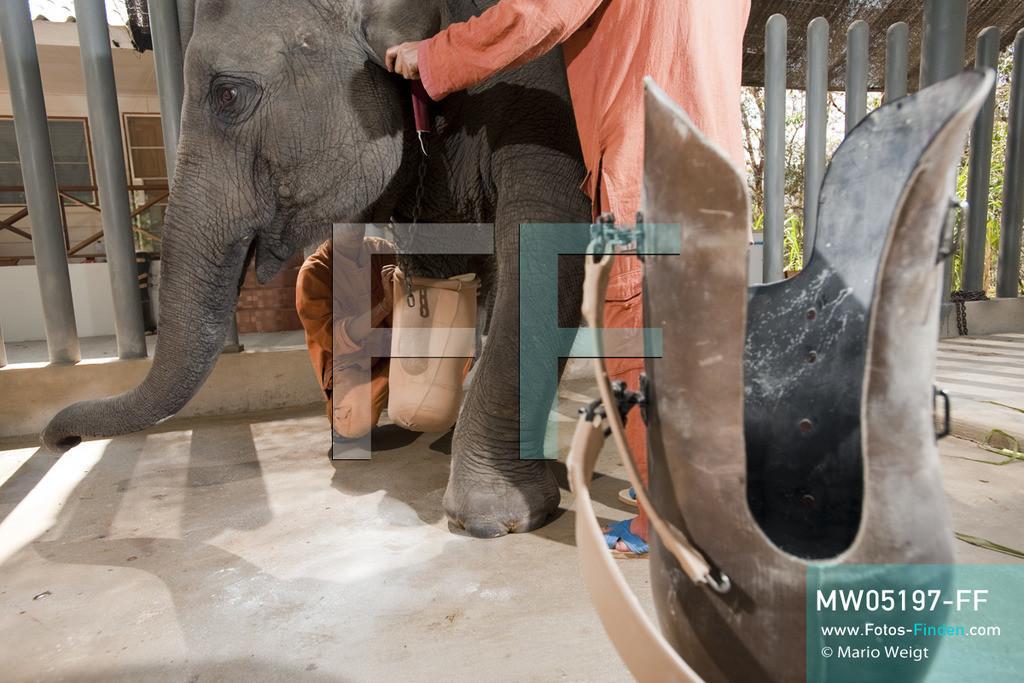 MW05197-FF | Thailand | Lampang | Reportage: Krankenhaus für Elefanten | Tierpfleger Somchai und Paradee werden gleich dem vierjährigen Elefantenbaby Mosha die Beinprothese anlegen.  ** Feindaten bitte anfragen bei Mario Weigt Photography, info@asia-stories.com **