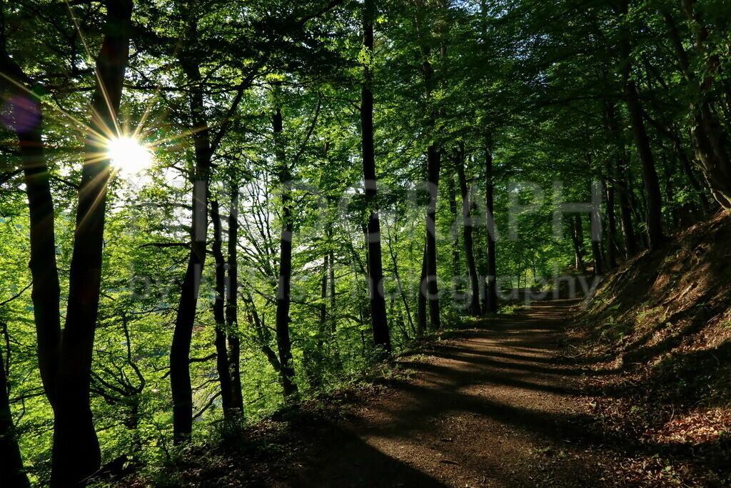 Stadtwald Iserlohn | Die Sonnenstrahlen scheinen durch das Laubdach der Waldstadt Iserlohn.
