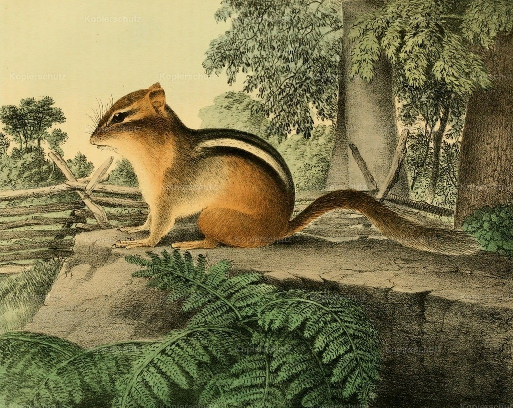 Doughty_ T. (1793-1856) - Cabinet of Natural History 1830 - Ground Squirrel