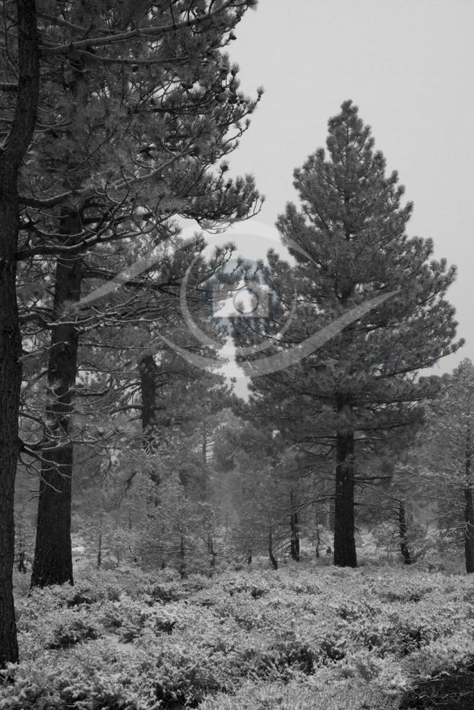 USA_Yosemite NP01