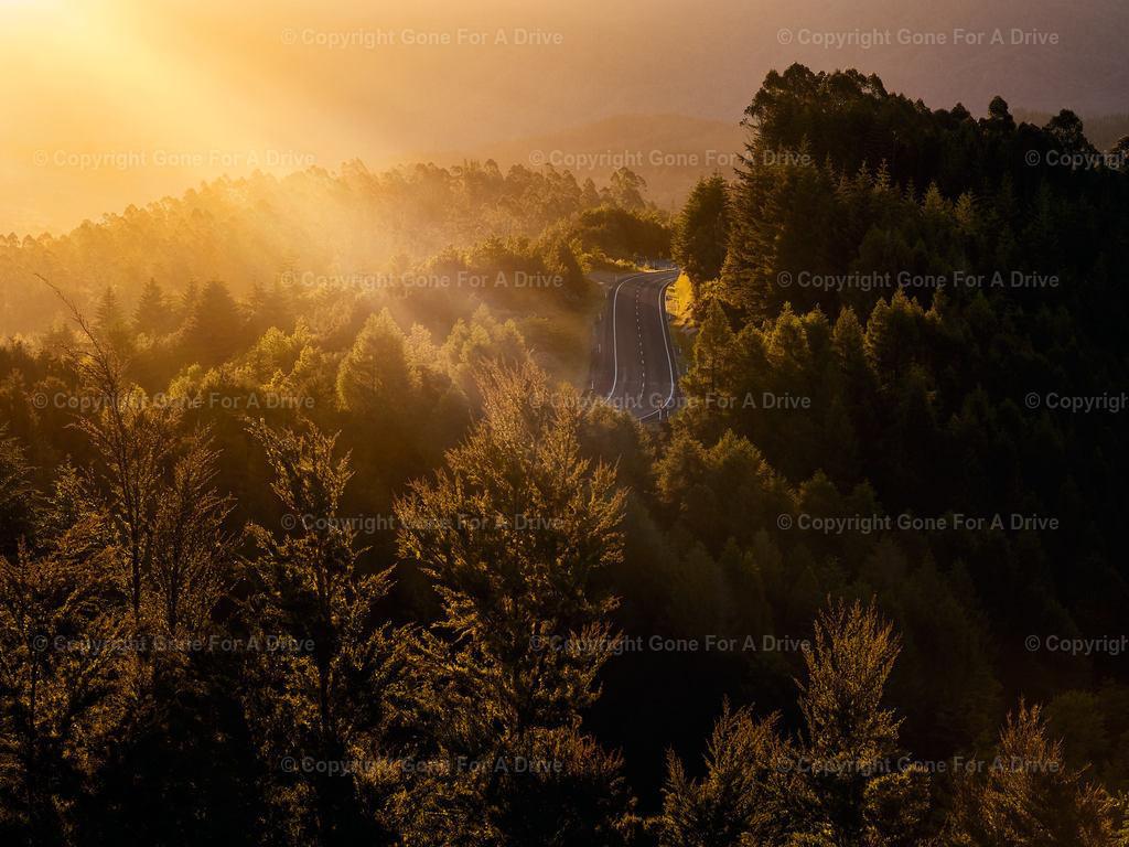 Neuseeland | Sonnenstrahlen über  Wald mit Landstraße