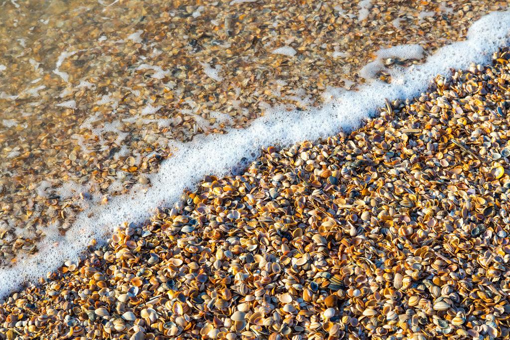 JT-161016-378 | Viele kleine Muscheln am Strand, Nordsee, Welle, Meerschaum,