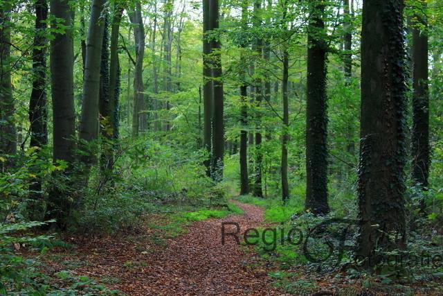Herbstwald | Waldweg bei der Marienburg