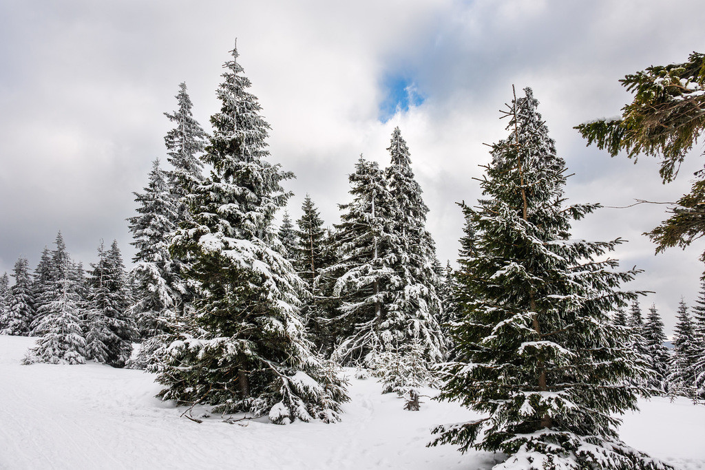Winter im Riesengebirge bei Pec pod Snezkou, Tschechien | Winter im Riesengebirge bei Pec pod Snezkou, Tschechien.