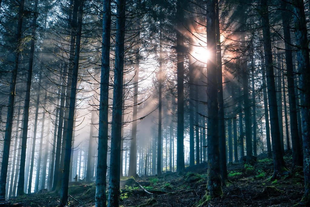 Mystischer Nordschwarzwald | Geheimnisvolle Lichtstimmung im Nordschwarzwald