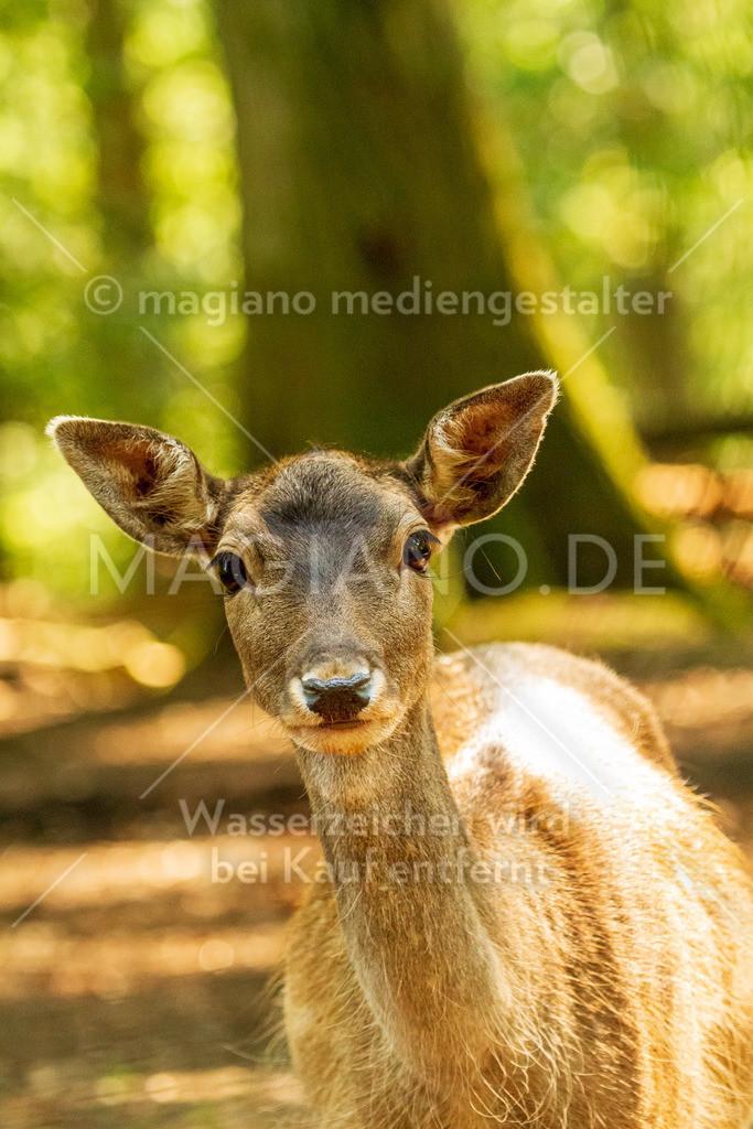Wildpark-Kaiserslautern_20210918_0811