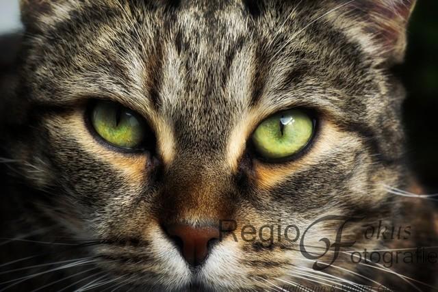 Fesselnder Blick | Magisch wirkt der Blick aus tiefgrünen Augen