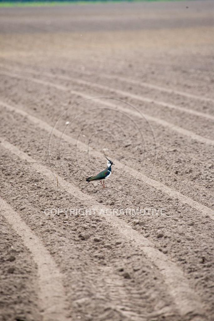 20100429-IMG_5943   Wildtier Vogel