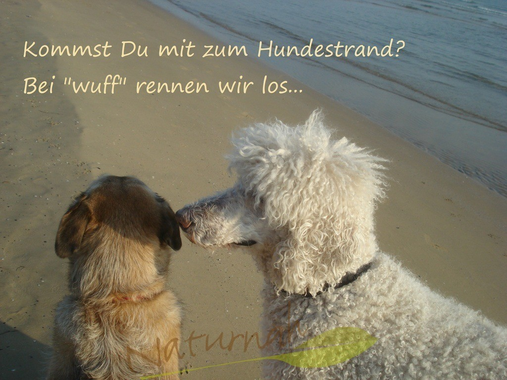 Wuff und Hundestrand