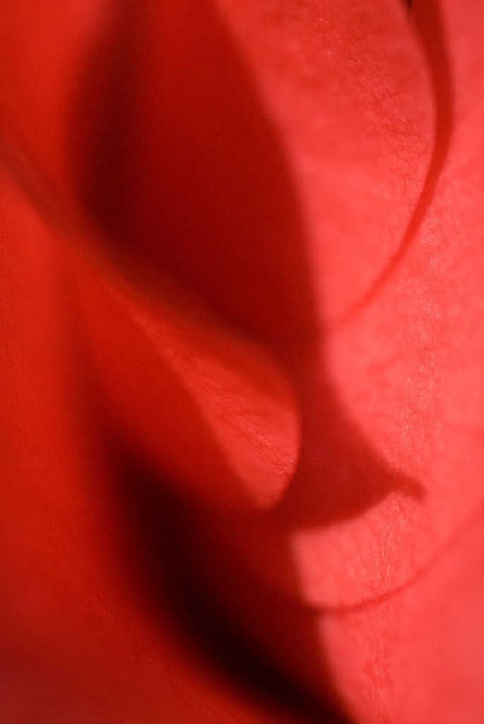Best. Nr. partnerschaft05 | Kamelienblüte