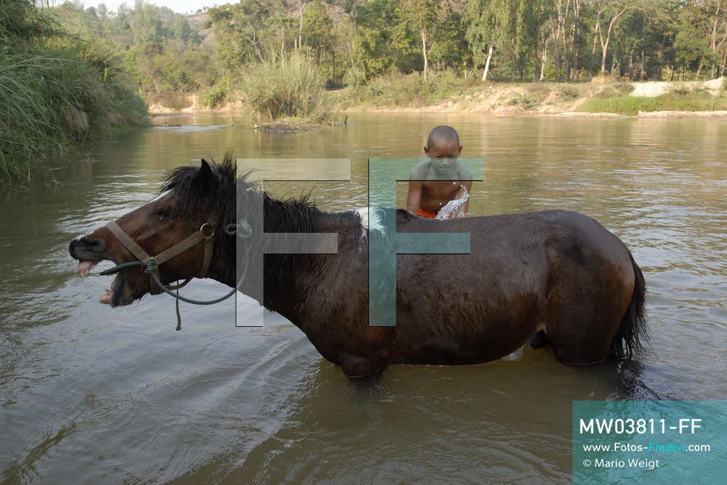 MW03811-FF | Thailand | Goldenes Dreieck | Reportage: Buddhas Ranch im Dschungel | Junger Mönch wäscht sein Pferd im Fluss.  ** Feindaten bitte anfragen bei Mario Weigt Photography, info@asia-stories.com **