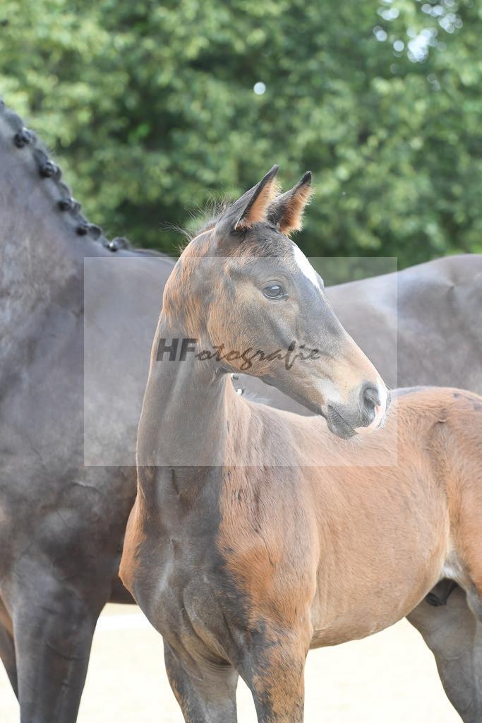 Kat-Nr. 24 HF DSP Va Bene_Mueller_2621544