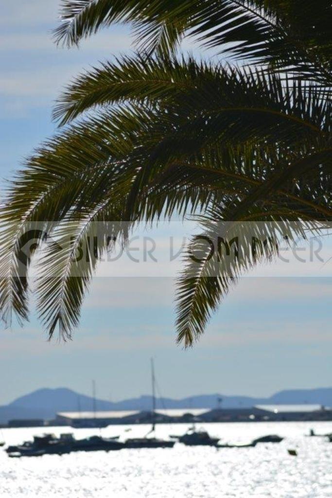 Bilder vom Meer San Pedro de Pinatar | Palmen am Meer in Spanien