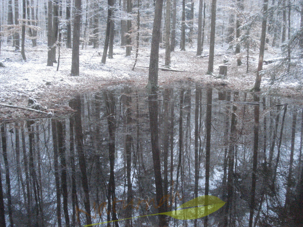 Winterspiegelsee | Wenn der Blick in die Tiefe geht, gelangst Du zu Dir selbst!