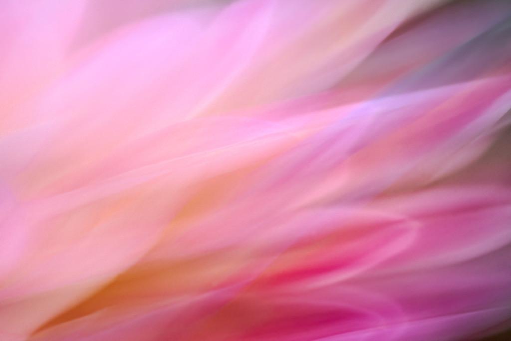 Abstraktes Portrait einer rosafarbenen Seerosendahlie   Best. Nr. d_2020_06_0324.  https://shop.soulimages.eu/img/8izyg7 (Wartebereich einer Azrtpraxis oder einer Klinik). Weitere Einrichtungsbeispiele sind in der Galerie