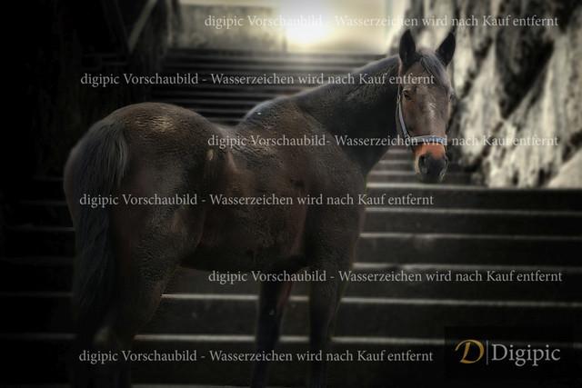 Pferd 1 - Vorschaubild | Pferd vor Stiege