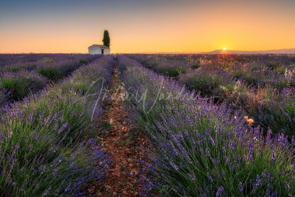 Lavendelmorgen (Querformat)
