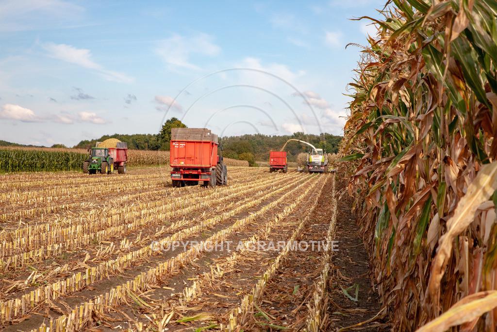 20080914-IMG_8935 | Silomais wird gehäckselt - AGRARFOTO Bilder aus der Landwirtschaft