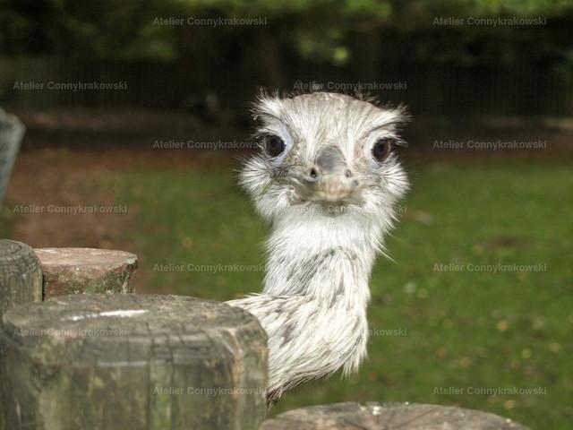 Emu | OLYMPUS DIGITAL CAMERA