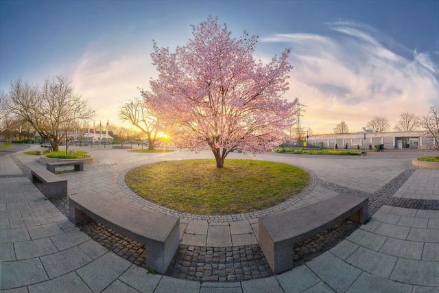 Walk in the Park | Ein Spaziergang im Frühling durch den Park birgt so manche schöne Überraschung wie hier einen herrlichen Kirschbaum.