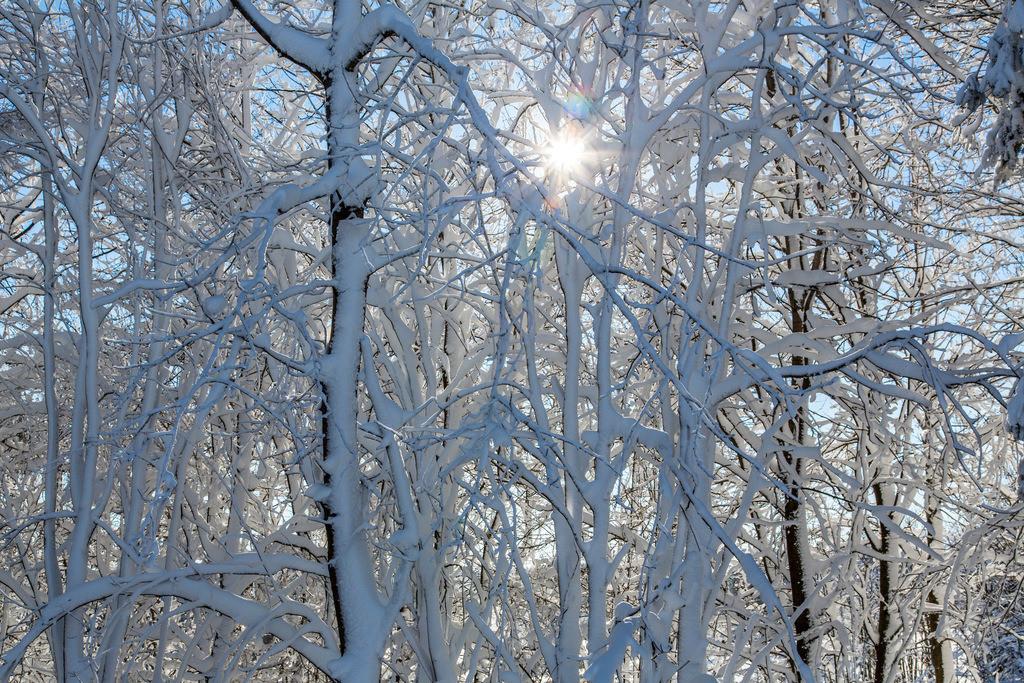 JT-160119-253   Winter im  Hochsauerlandkreis, vereiste, verschneite Bäume, Büsche,