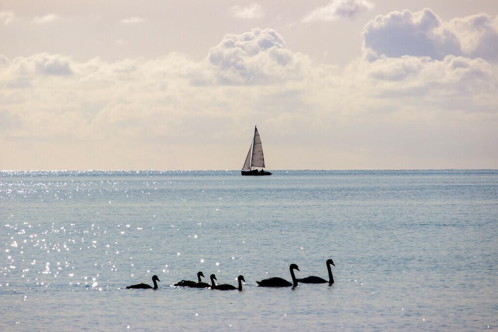 Strand in Damp   Segelboot vor Damp mit Schwanenfamilie im Vordergrund