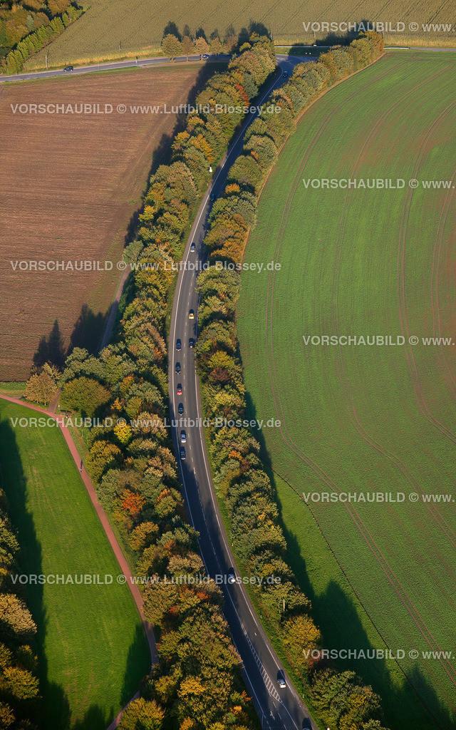 RE11101571 | Allee Hohlweg August-Schmidt-Ring,  Recklinghausen, Ruhrgebiet, Nordrhein-Westfalen, Deutschland, Europa