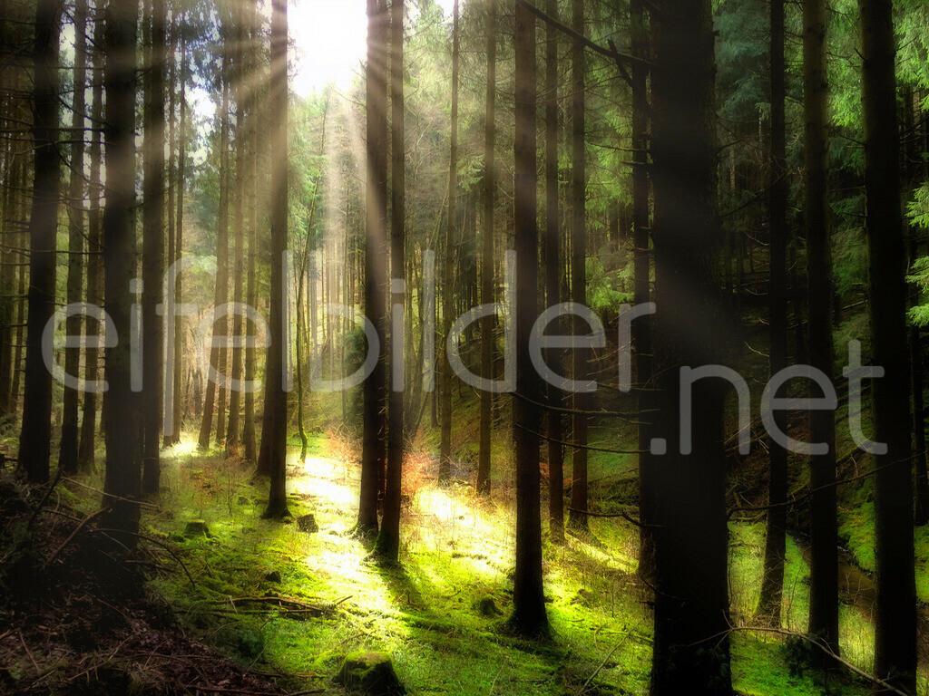 Licht & Schatten - Zauber des Waldes | fotografiert in Daun, Vulkaneifel