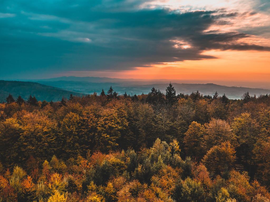 Schwarzwald | Herbstlicher Schwarzwald bei Ettenheim