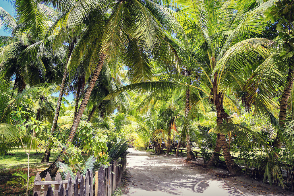 104-Seychellen-Anse Lazio-4