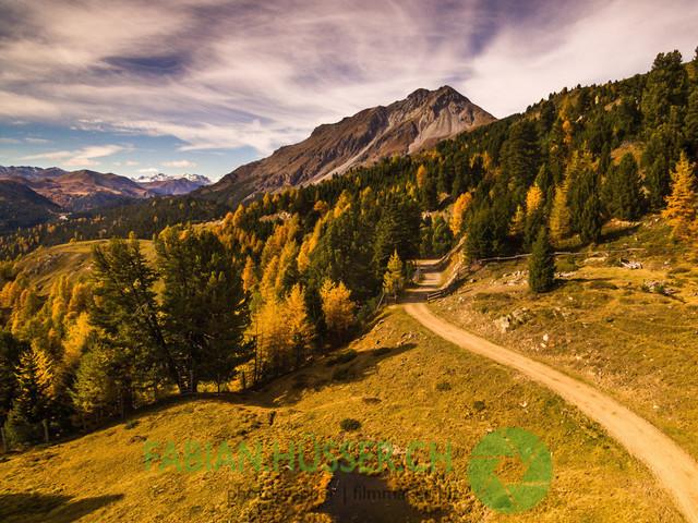 Goldener Herbst | Am Ofenpass, Val Müstair, Schweiz