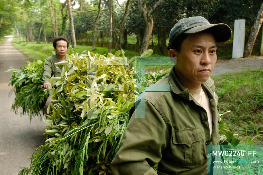 MW02246-FF | Vietnam | Provinz Ninh Binh | Reportage: Endangered Primate Rescue Center | Tierpfleger bringen zweimal täglich mit dem Motorrad spezielle Blätter für die Affen. Der Deutsche Tilo Nadler leitet das Rettungszentrum für gefährdete Primaten im Cuc-Phuong-Nationalpark.    ** Feindaten bitte anfragen bei Mario Weigt Photography, info@asia-stories.com **