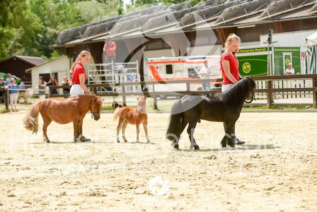 RFV Ochtrup - Fohlenparade-0971