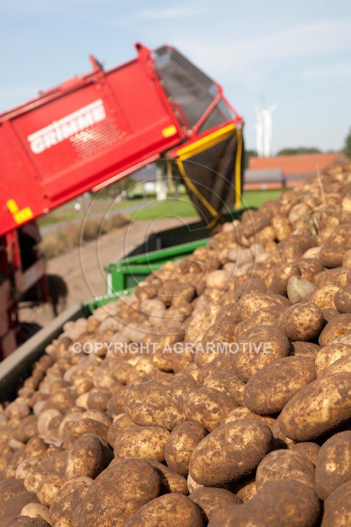 20110929-IMG_5991 | Ernte auf einem Kartoffelfeld - AGRARBILDER