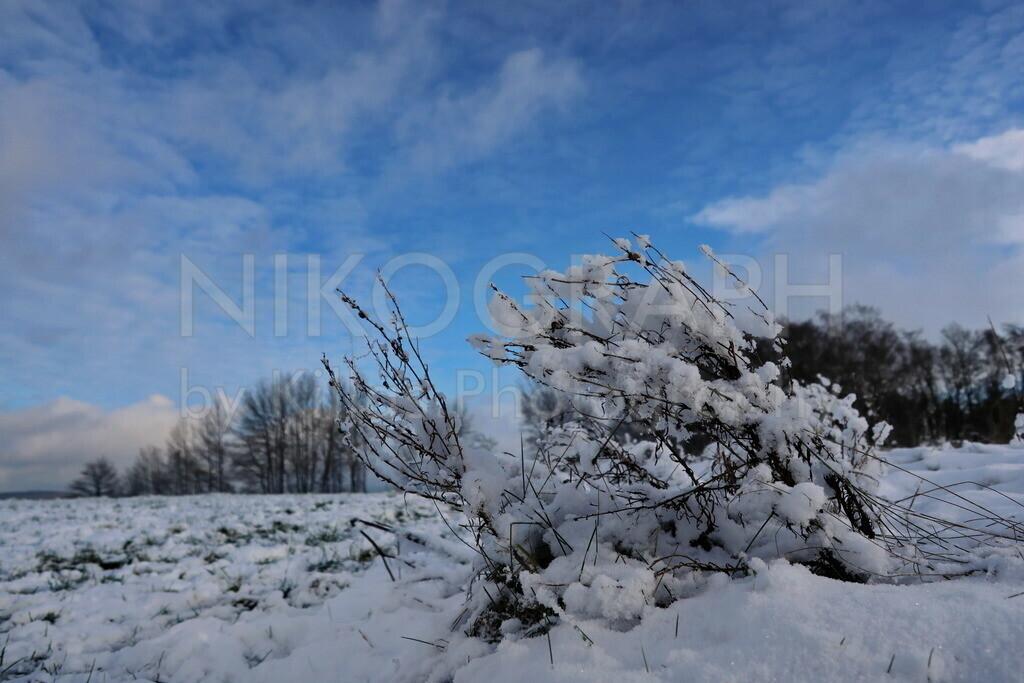 Gestrüpp im Schnee | Verschneites Gestrüpp in den Feldern bei Iserlohn-Kesbern. Eine Winteridylle unterm blauen Wolkenhimmel.