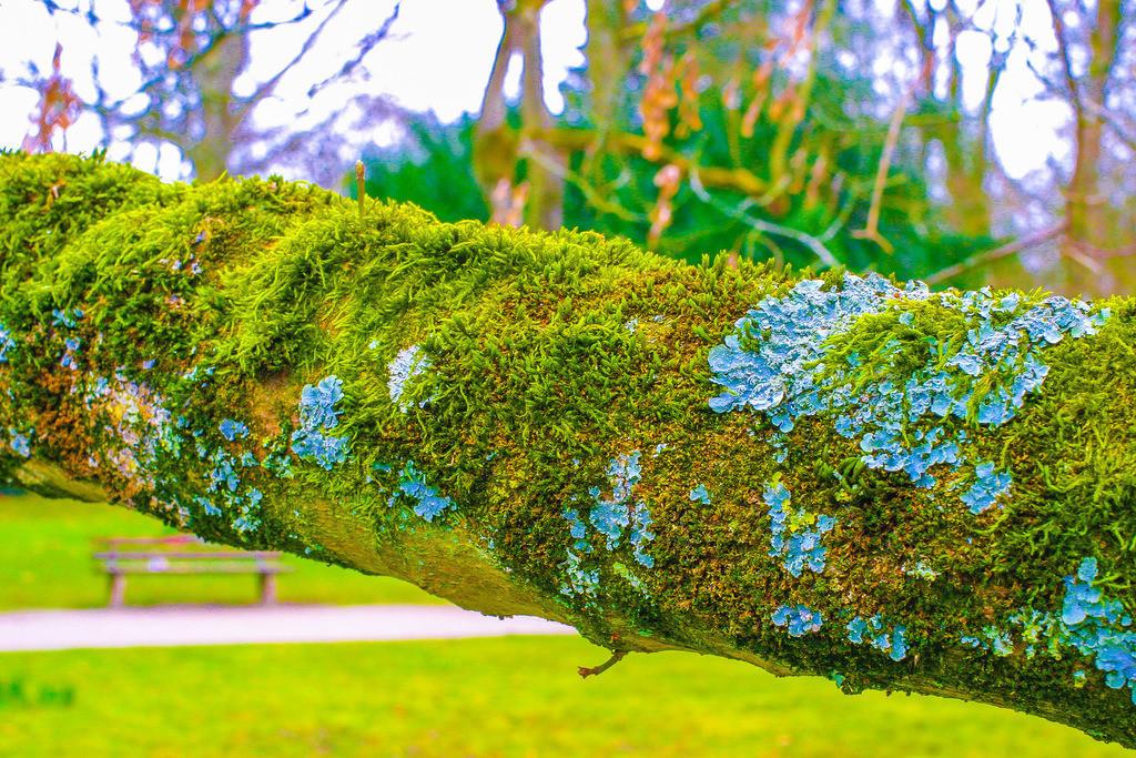 Schlosspark_Moers0221_11