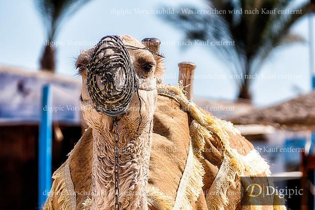 Anlage Kamel 4