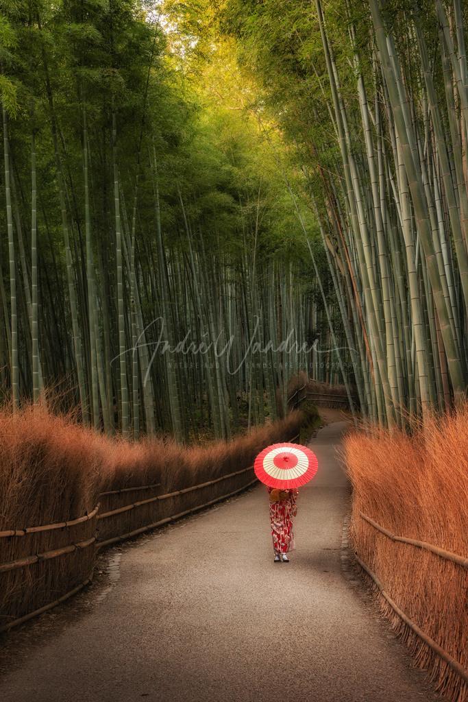 Wanderung im Bambuswald