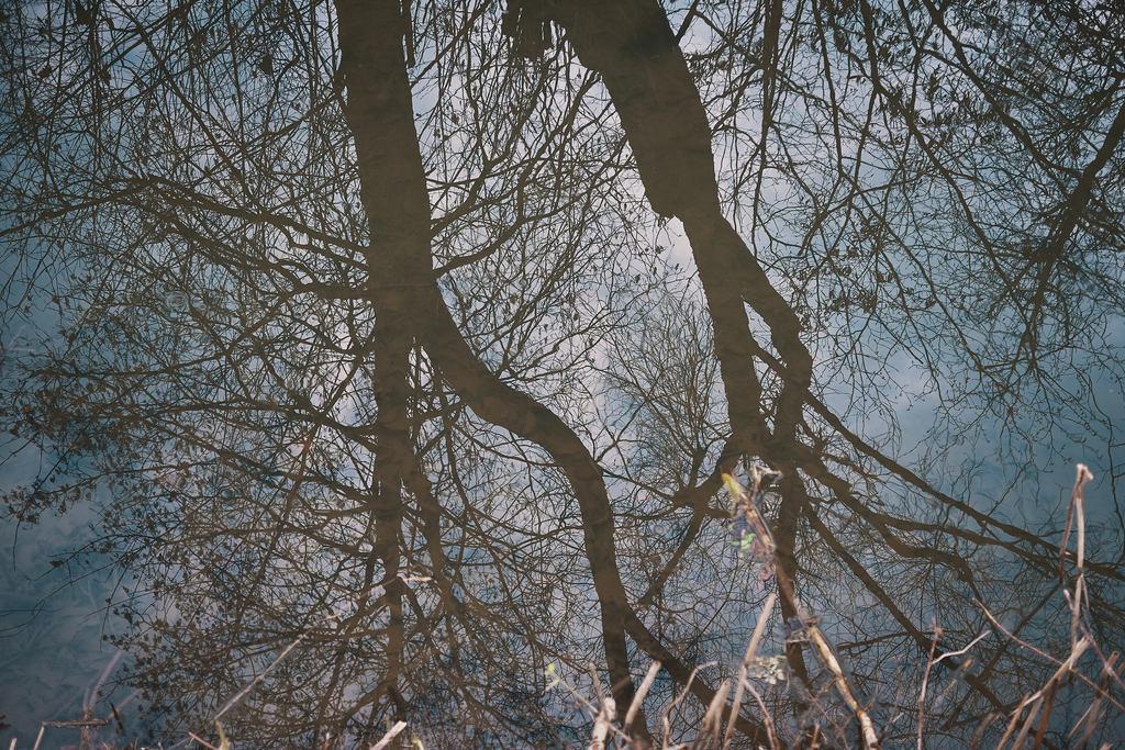 Tänikonerweiher