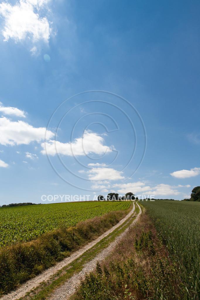 20090613-IMG_3196 | Symbolbild Zukunft - AGRARMOTIVE Bilder aus der Landwirtschaft
