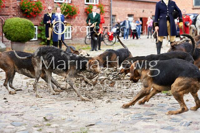 Jagd Knoop 217620_Marina Hewig