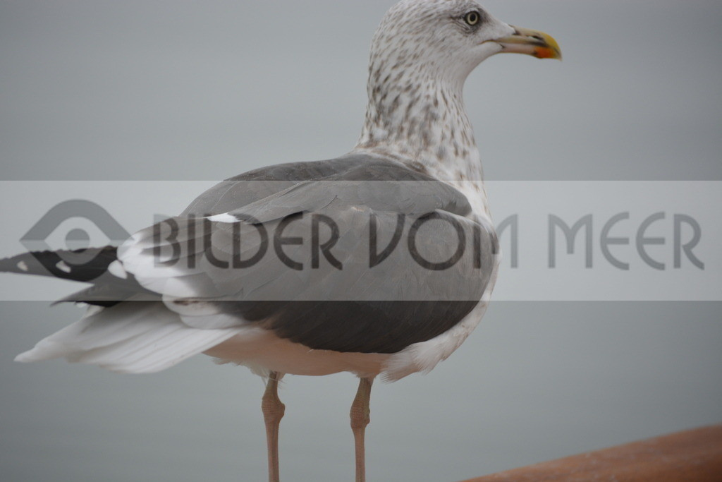 Möwen Bilder | Stolze Möwe